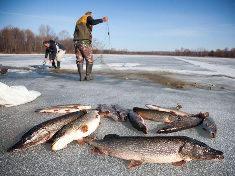 ловля рыбы сетью на реках